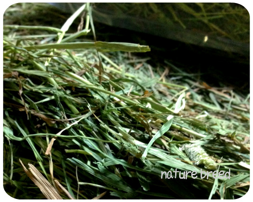 アメリカ二番刈りチモシーシングルプレスうさぎの牧草